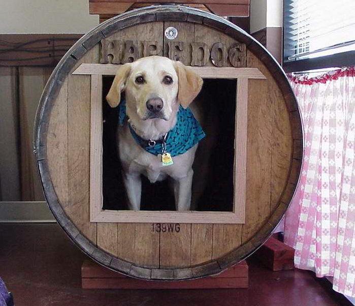 Hap E Dog Pet Grooming
